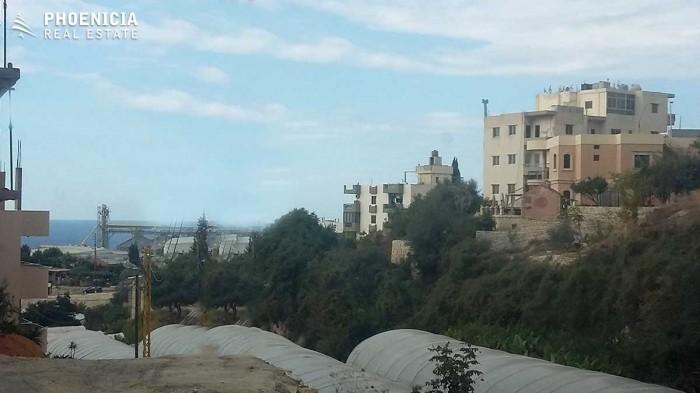 in Safra