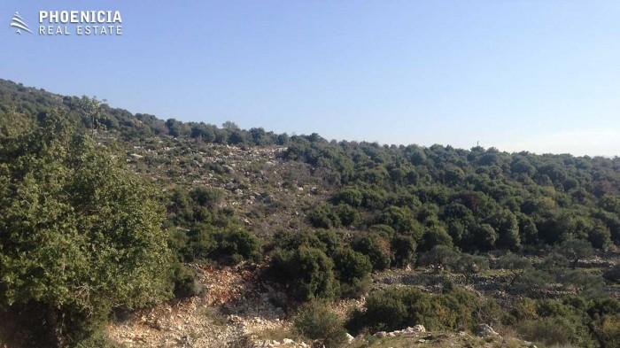 in Gharzouz